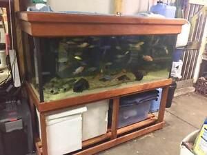 5/2/2 fish tank complete settup Ramsgate Rockdale Area Preview