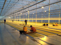 Full Time, Day PERMANENT & WINTER Greenhouse Openings