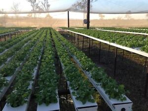 Business Opportunity - Farm for Lease SE QLD Coominya Somerset Area Preview