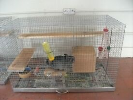 Male Chinchilla With Cage .