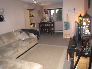 One bedroom, downtown Hull,