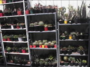 Cacti and Succulents for sale by Private Grower from $2.00 Belmont South Lake Macquarie Area Preview