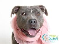Missy - FOSTER HOME NEEDED