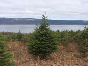 Christmas Tree Farm on 98.83 Acres-Richard-NL Island Realty