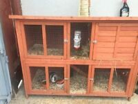 2 MALE Guinea pigs with double hutch need a new home