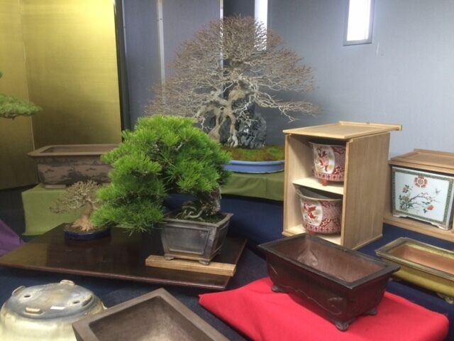 David Cheshire Bonsai