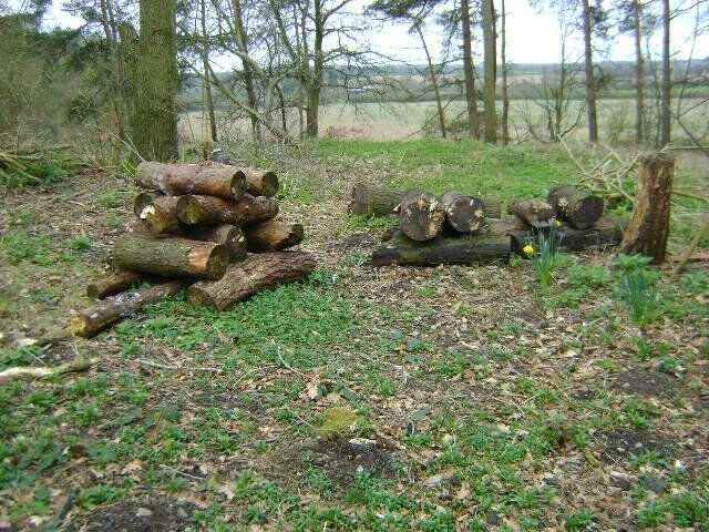 WOOD FOR SALE FOR LOG BURNERSOPEN FIRESin Coventry, West MidlandsGumtree - WOOD FOR SALE SUITABLE FOR LOG BURNERS / OPEN FIRES. THIS WOOD WAS FELLED LAST YEAR SO IS SUITABLE FOR BURNING NOW. THE WOOD COMES IN METRE LENGTHS VARYING WIDTHS. JUST NEEDS LOGGING