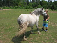 5 year old pony mare
