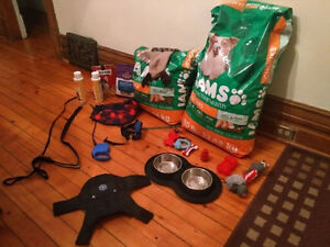 Various dog supplies for sale