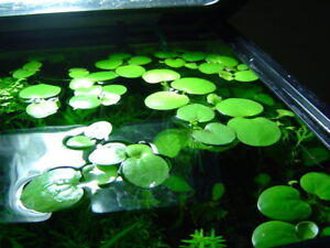 Freshwater fish and plants for sale