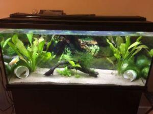 Axolotls & Full Aquarium Set Up