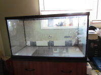 50 gallon lizard tank with two heat lamps