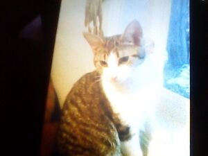 7 MONTH OLD MALE KITTEN LOOKING FOR A NEW HOME