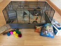 Hamsters - Baby Dwarf Hamster with Cage, Accessories, Toys, Wheel, Tunnel, Food, Bedding