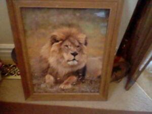 Framed Lion photo