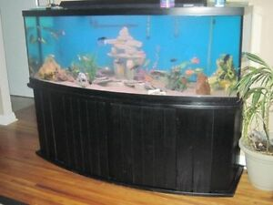 180 bowlfront fish tank Kitchener / Waterloo Kitchener Area image 1