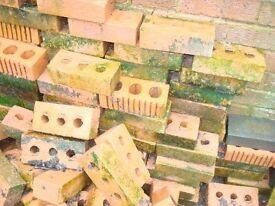 Bricks x 100 +