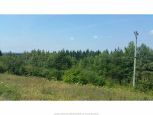 17 MCFARLANE RD. BERRY MILLS! 3 ACRES OFF HOMESTEAD RD!