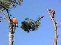 Tree and limb removal