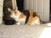 Free fixed female cat good loving home (need home by Oct/15/2015