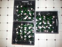 4+ dozen clean Grolsch beer bottles 450ml-REDUCED