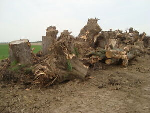 Stump Grinding - Wood and Construction Waste Removal Cambridge Kitchener Area image 5