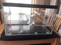 Hamster / Mice / Gerbil - Glass Tank