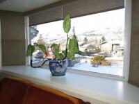 4Bed 2Bath home, Fab View,Fruit trees lots of parking View!!!!!