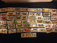 COMPLETE SET OF 50 BROOK BOND TEA CARDS BUTTERFLIES OF WORLD £8 ono OTHER SETS FOR SALE