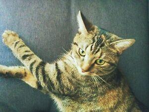 Petite chatte très sociable et affectueuse à donner !