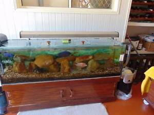 5ft fish tank Little Mountain Caloundra Area Preview