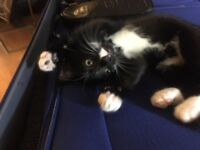 Kitten - black and white male NEEDS TO GO ASAP