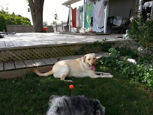 Dog Vacay at the PAW'nderosa-In Home Boarding Kingston Kingston Area image 3