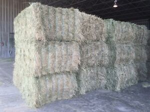 Large Square Hay for sale near Innisfail