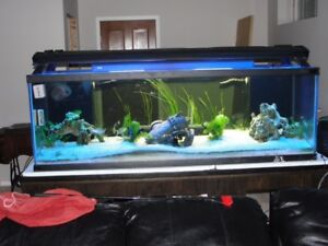 SOLD  SOLD  230 gal Fish Tank