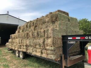 100 square hay bales for sale. Delivery possible.