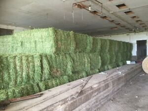 Dairy Quality 3rd cut Alfalfa hay for sale