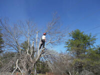 Anthony`s Arborist - Tree Removal - Wood lot Consulting