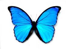 BLUE BUTTERFLY CLEANING Mudjimba Maroochydore Area Preview