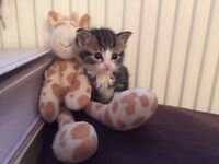 Tiny Kitten looking for a caring family to adopt her.