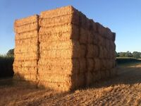wheat straw 2015 crop