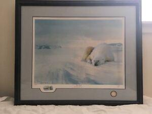 Beautiful Polar Bear Print