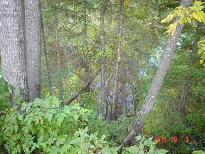 looking for privacy ?Perfect to put your trailer / cabin on Gatineau Ottawa / Gatineau Area image 2