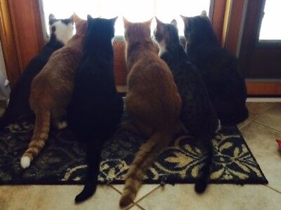 SPONSOR DONATE TO BIRD WATCHING CATS KITTEN RECEIVE COLOR PHOTO CAT RESCUE