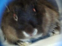 Doe rabbit