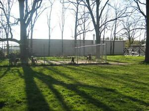 Abby's Boarding Kennel London Ontario image 4