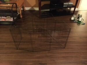 8 month old guinea pig with starter kit and cage St. John's Newfoundland image 2