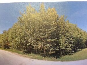 2 Lush Lots Just Waiting For Your Dream Home!!  Big River, SK