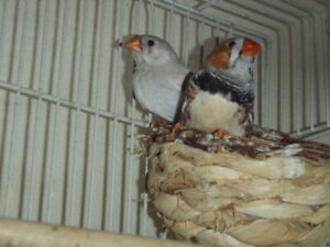 Lovely Aviary Additions