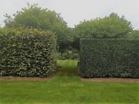 Special Branch Tree and Garden Maintenance Service.